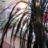 アロマ・心理療法家の豊かさを感じる時間 ~リシェス~:June 06, 2009